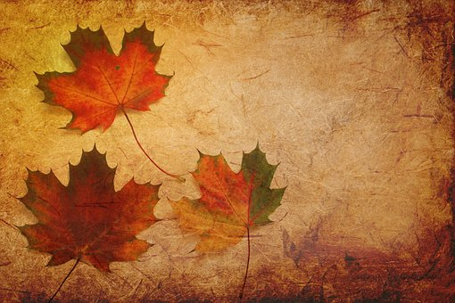 Fall Leaf Background